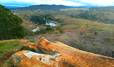 Valley with log